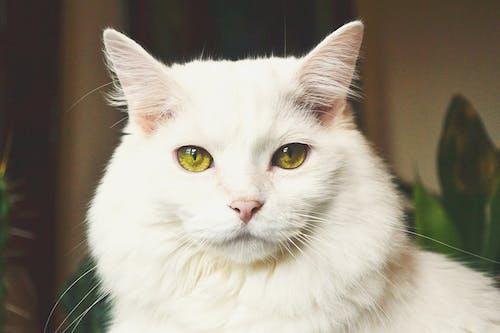 Бесплатное стоковое фото с глаза, желтые глаза, золотой