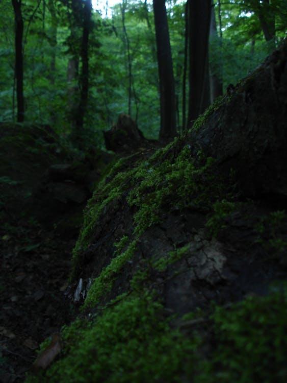 Free stock photo of closeup, fairy tale, fallen tree
