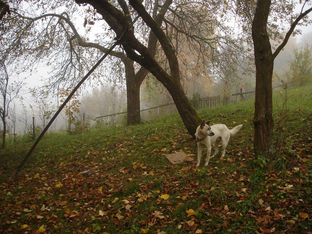 Free stock photo of dog, early morning, fog