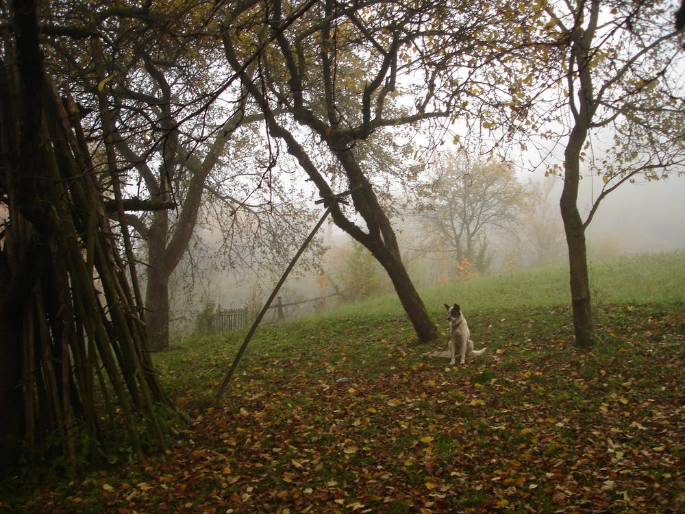 Free stock photo of autumn mood forest, dog, early morning