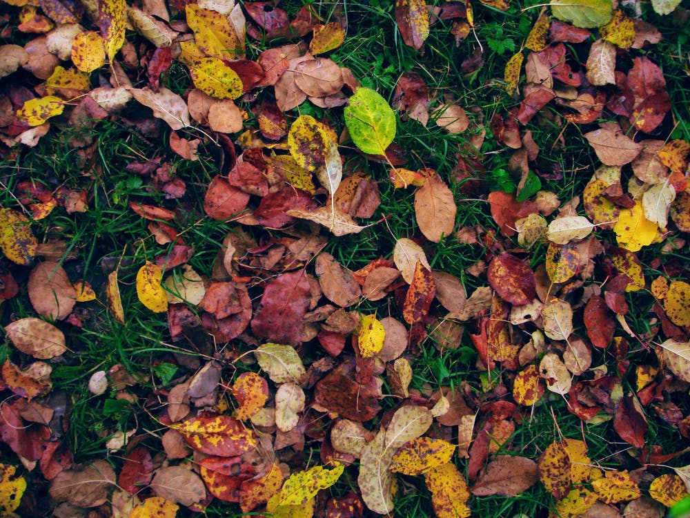 Free stock photo of autumn wallpaper, grass, green