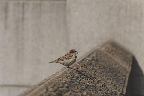 Free stock photo of animal, bird, blur