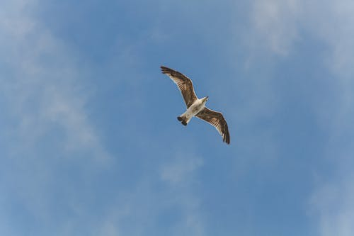 Free stock photo of air, animal, bird