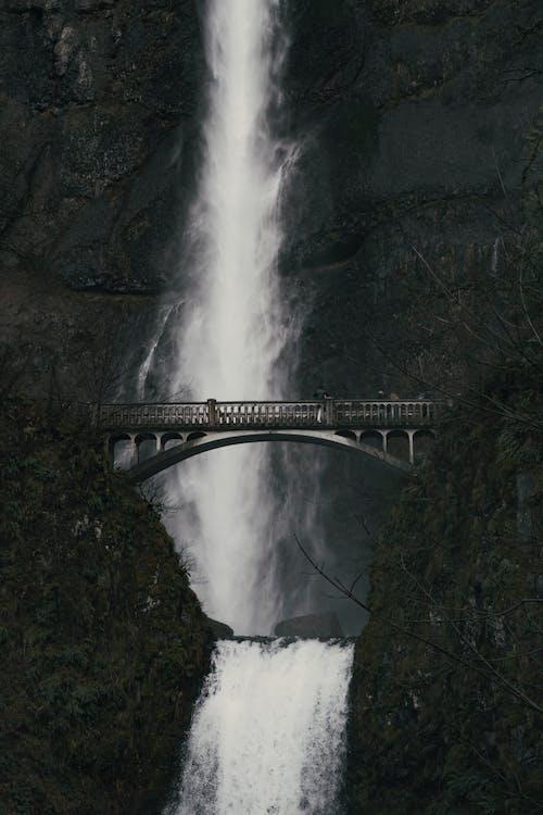 Immagine gratuita di acqua, acqua di fiume, alberi forestali