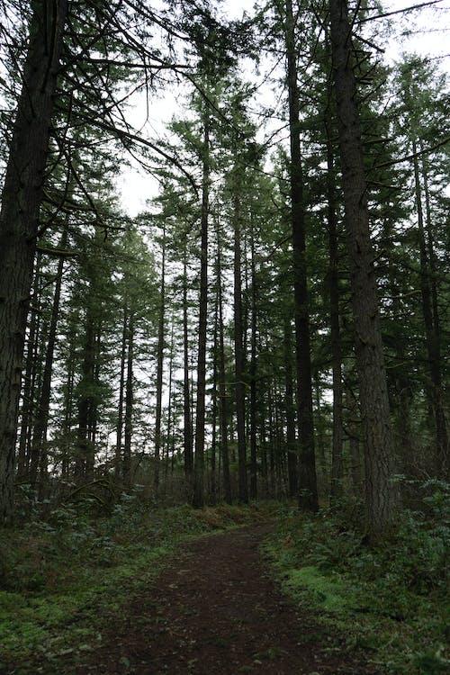 Immagine gratuita di alba, alberi forestali, albero