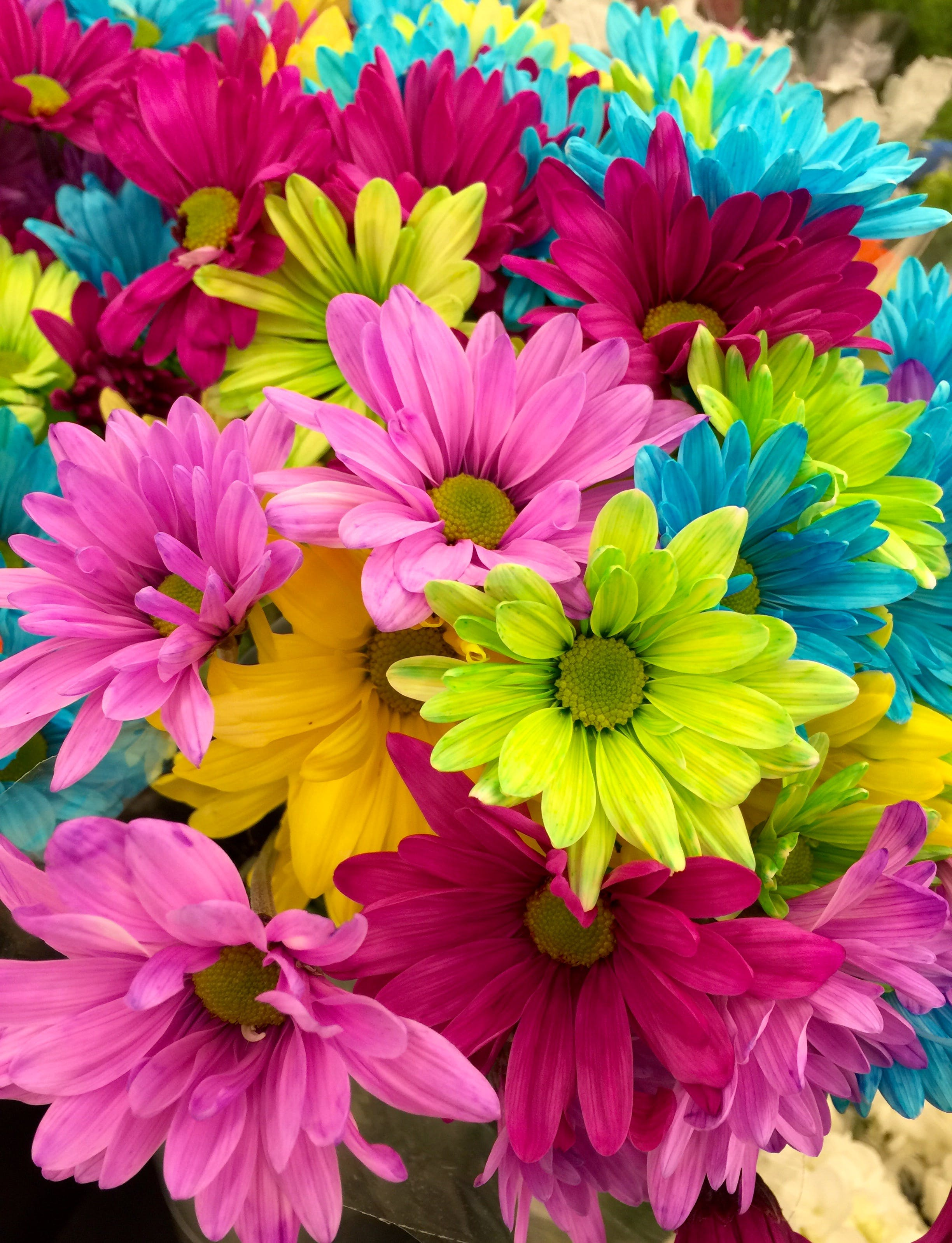 Pink Green Blue Multi Petaled Flowers