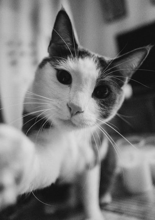 Immagine gratuita di adorabile, amante degli animali, amante dei gatti