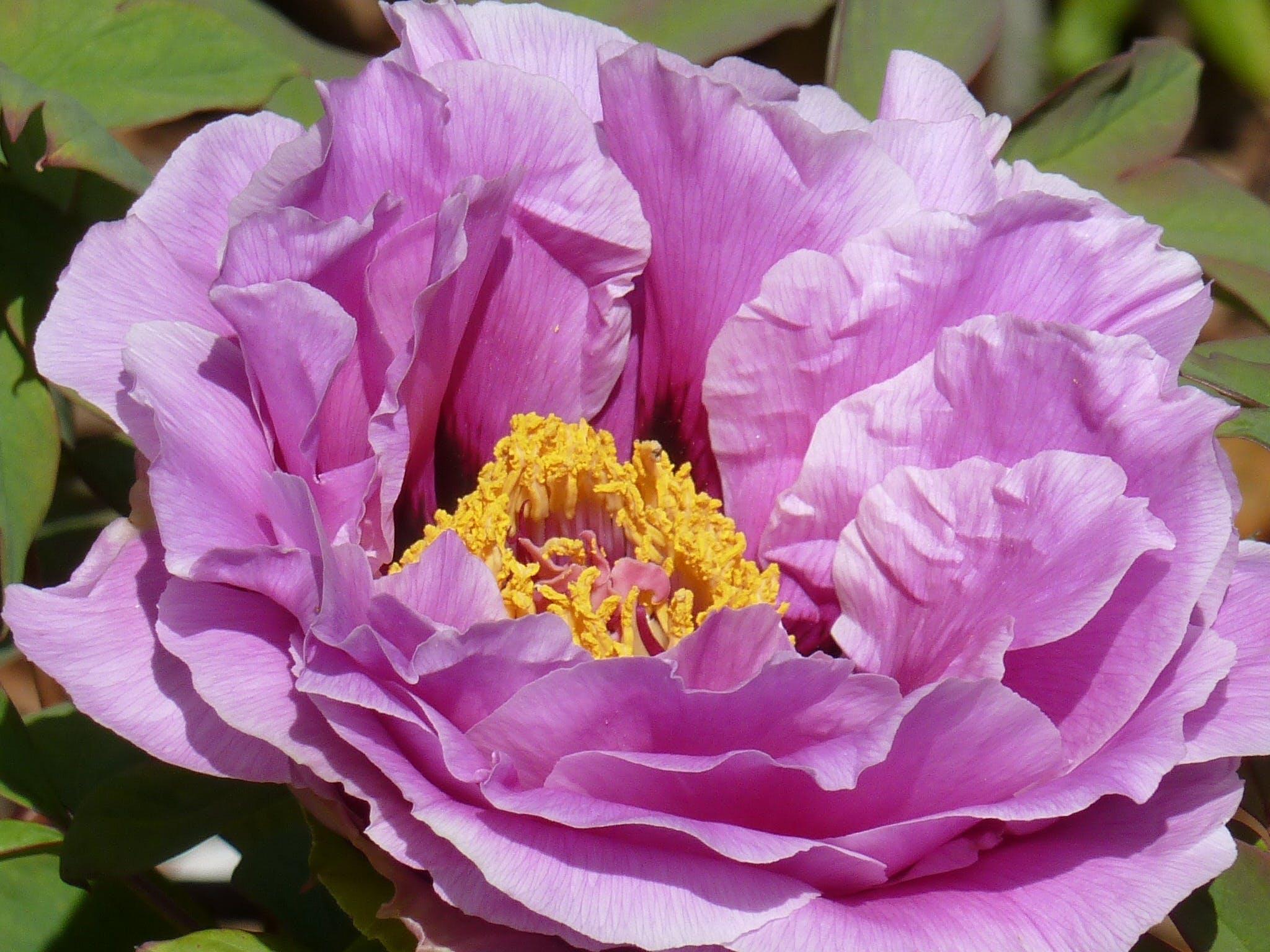 Macro Shots of Purple Flower