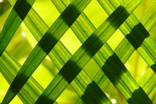 Kostnadsfri bild av abstrakt, bambu, blad, design
