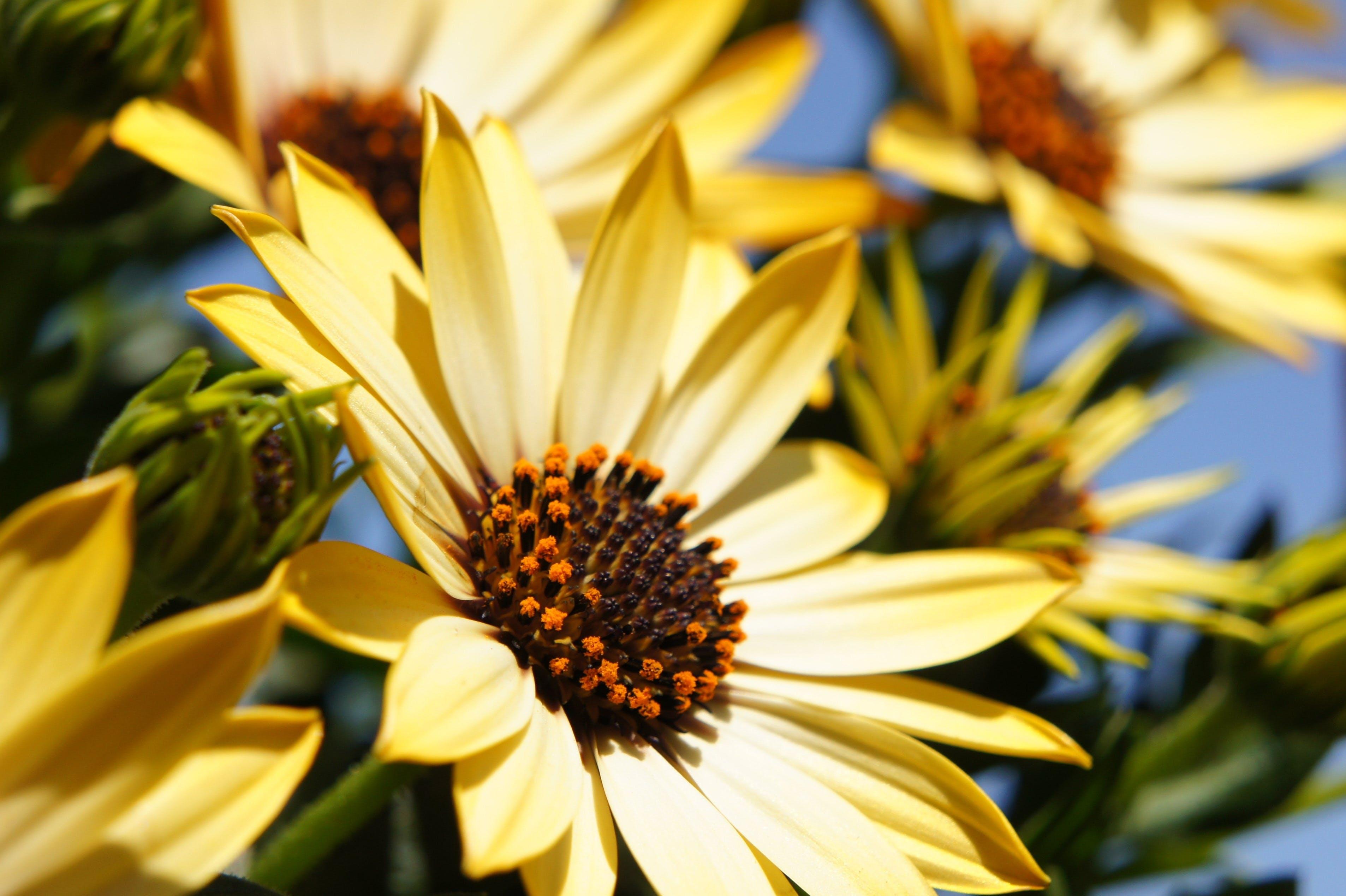Gratis stockfoto met bloeien, bloemblaadjes, bloemen, close-up