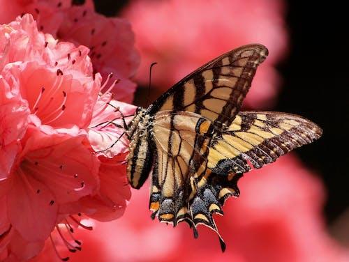 Photos gratuites de ailes, coloré, dynamique, fleurir