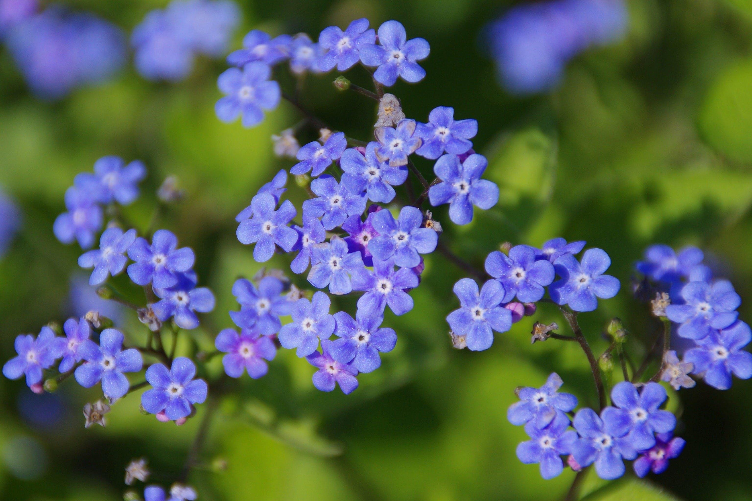 Photo of Purple 5 Petal Flower on Brown Stem during Daytime