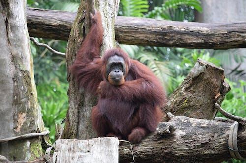 Foto profissional grátis de ameaçado de extinção, animais selvagens, animal