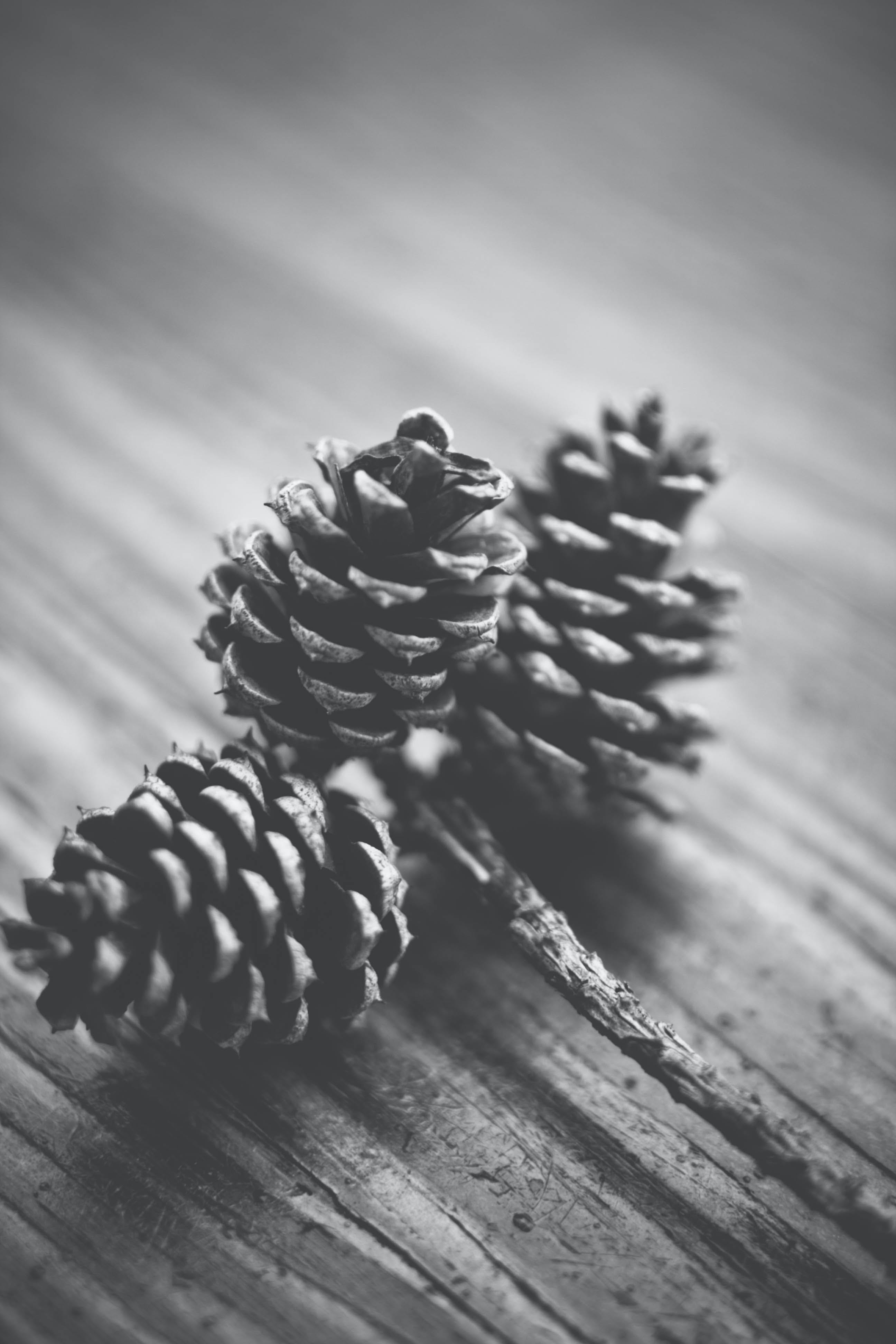 Grayscale Photography of Three Pinecones on Wooden Surface