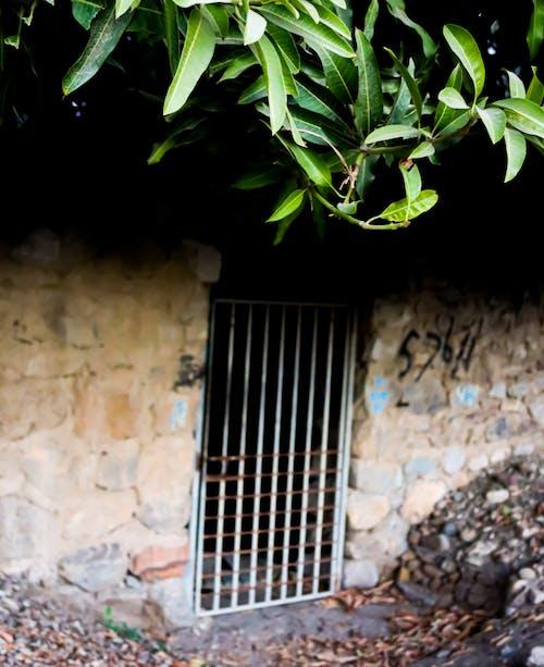 Free stock photo of classic, mango, old door
