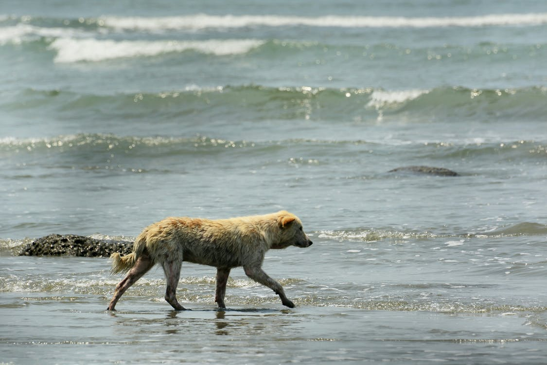 Free stock photo of animal photography, beach, brown