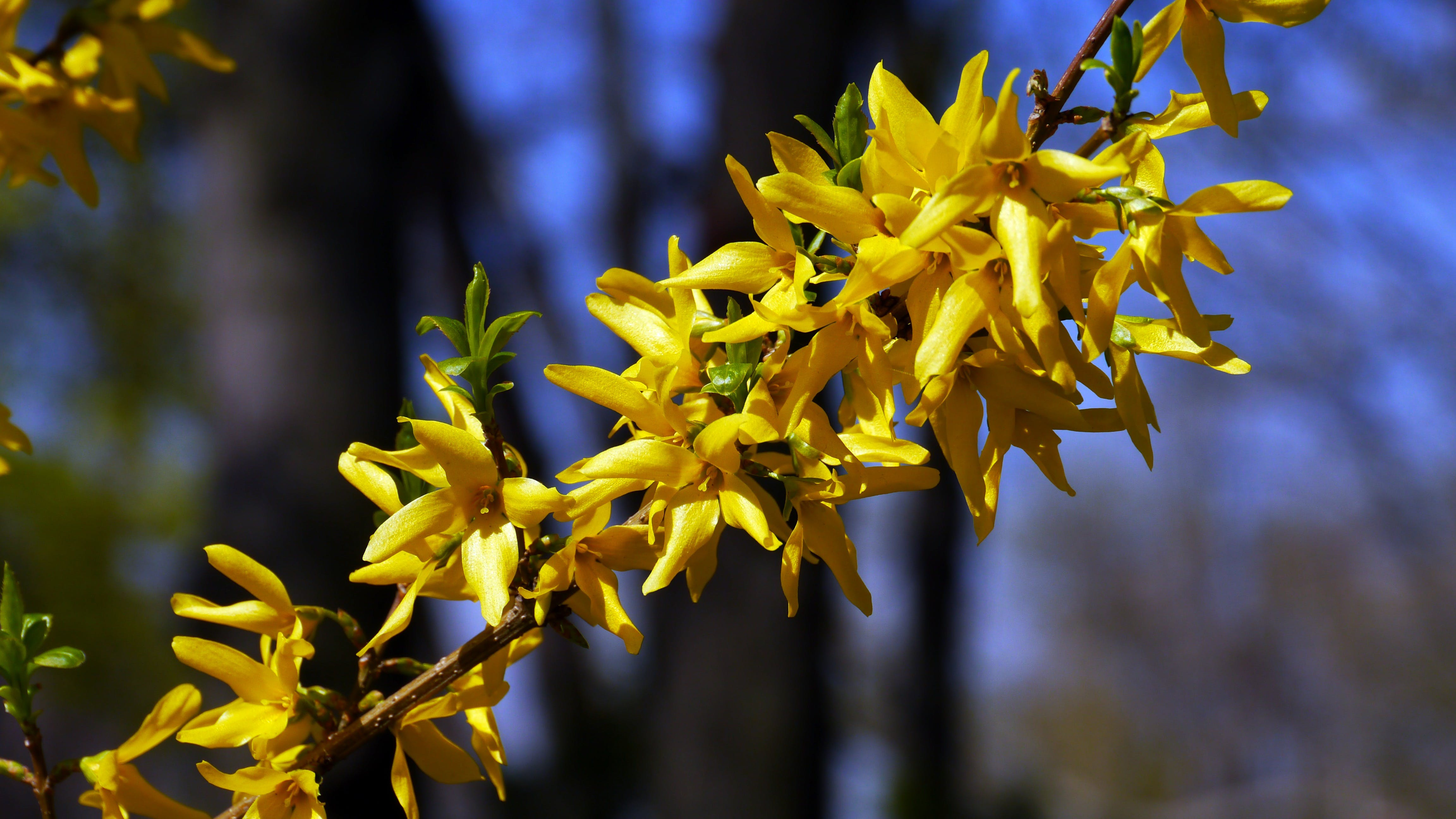Yellow Petaled Flower during Daytime Selective Focus Photography