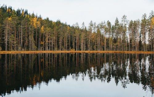Green Trees Beside the Lake