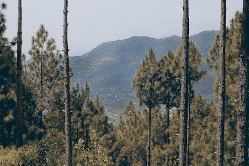 Foto profissional grátis de árvores, cênico, conífera, floresta