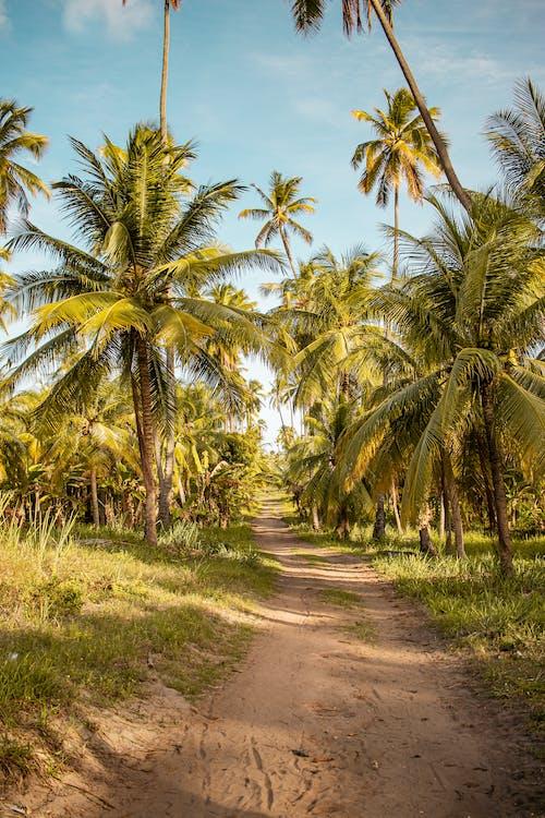 Kostenloses Stock Foto zu bäume, brasil, feldweg