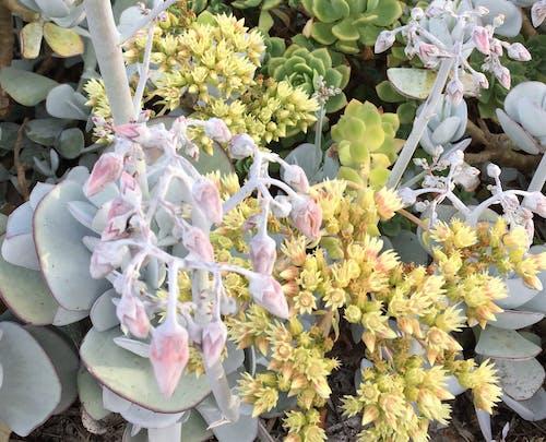 Kostenloses Stock Foto zu blumen, blumengarten, garten, pflanzen