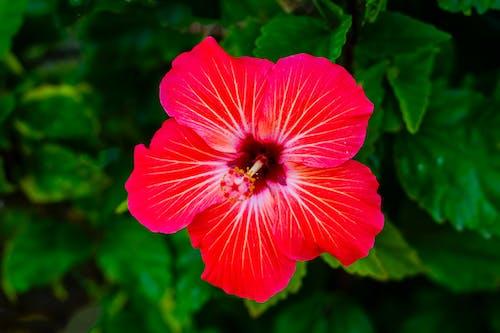 꽃, 꽃가루, 꽃이 피는의 무료 스톡 사진