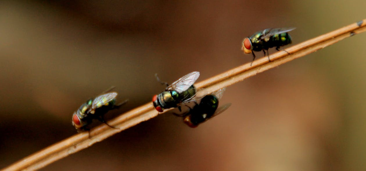 4 Black Fly on Brown Stick