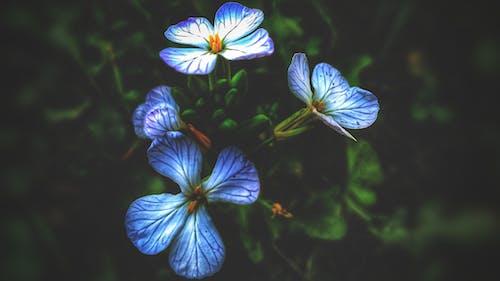 Beyaz çiçek, bulanık, bulanık arka plan, bulanıklık içeren Ücretsiz stok fotoğraf