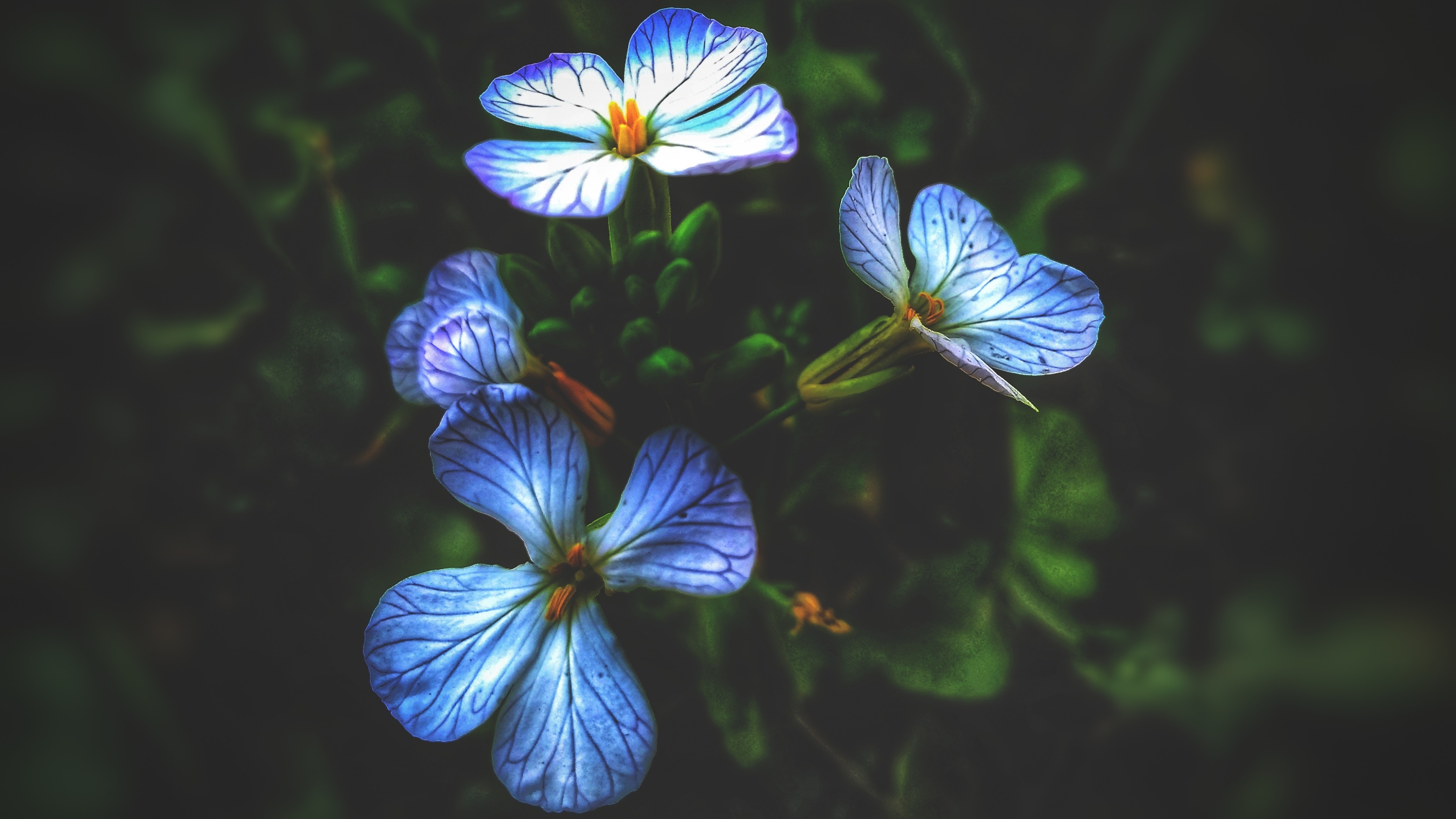 Free Stock Photo Of Beautiful Flowers Blue Flowers Blur