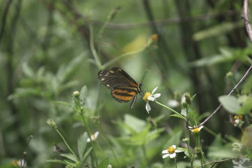 Free stock photo of butterfly, mexico, nature