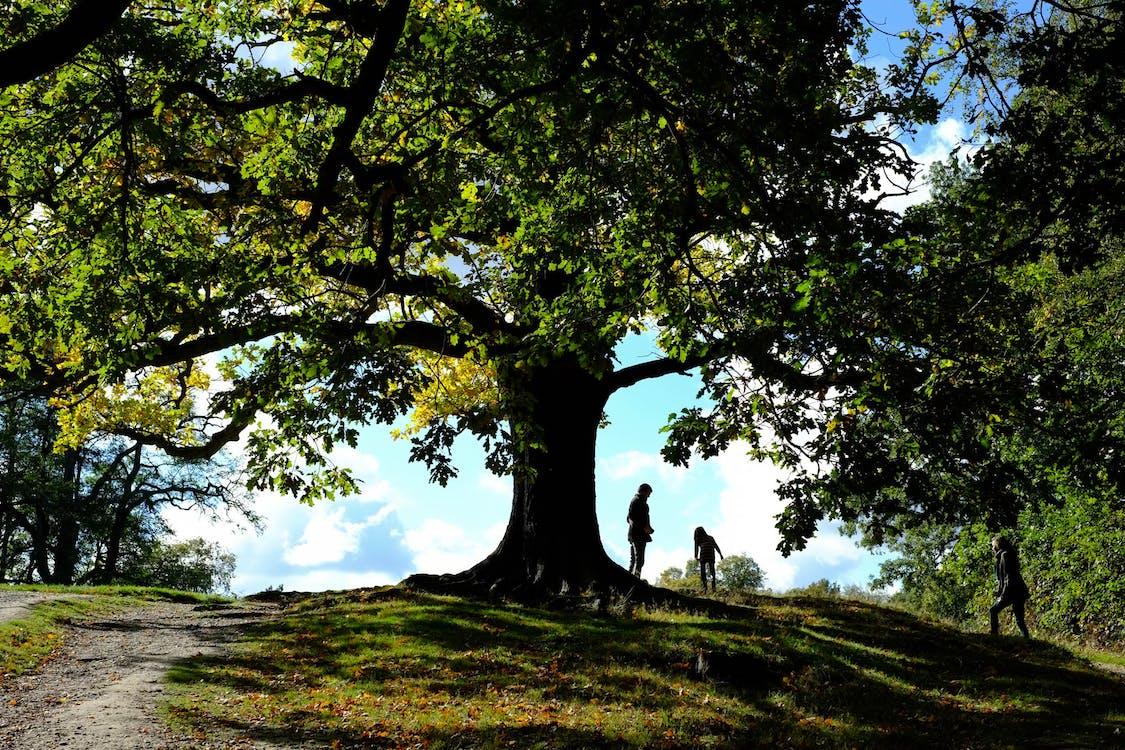 Free stock photo of green, hampstead heath, nature