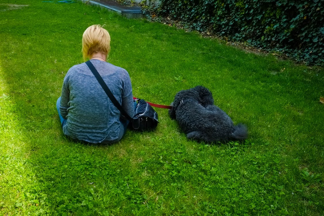 Free stock photo of dog on leash, green grass, woman sitting on grass