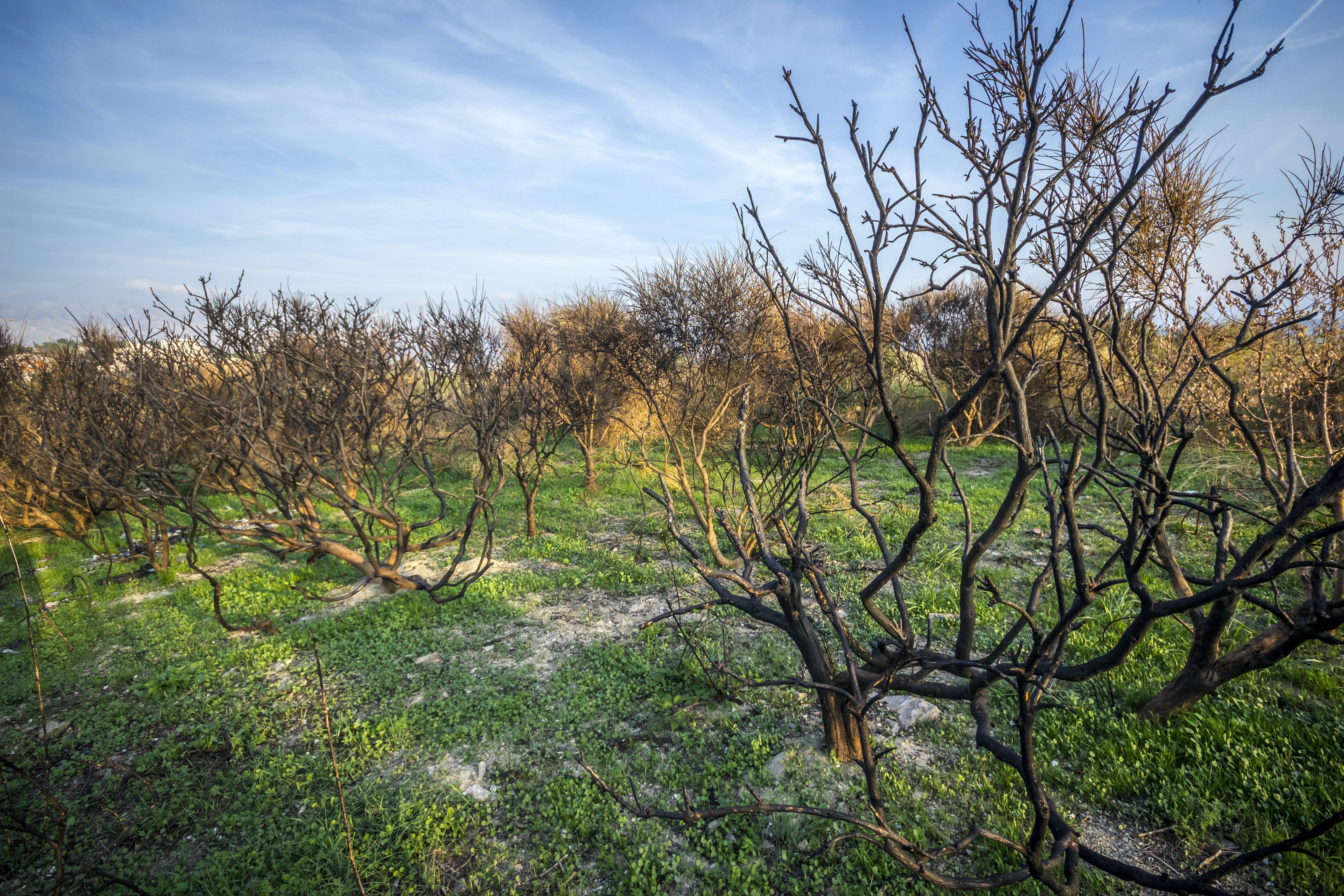 Kostenloses Stock Foto zu äste, bäume, gras, landschaftlich