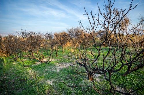 Безкоштовне стокове фото на тему «гілки, Денне світло, дерева, зростання»