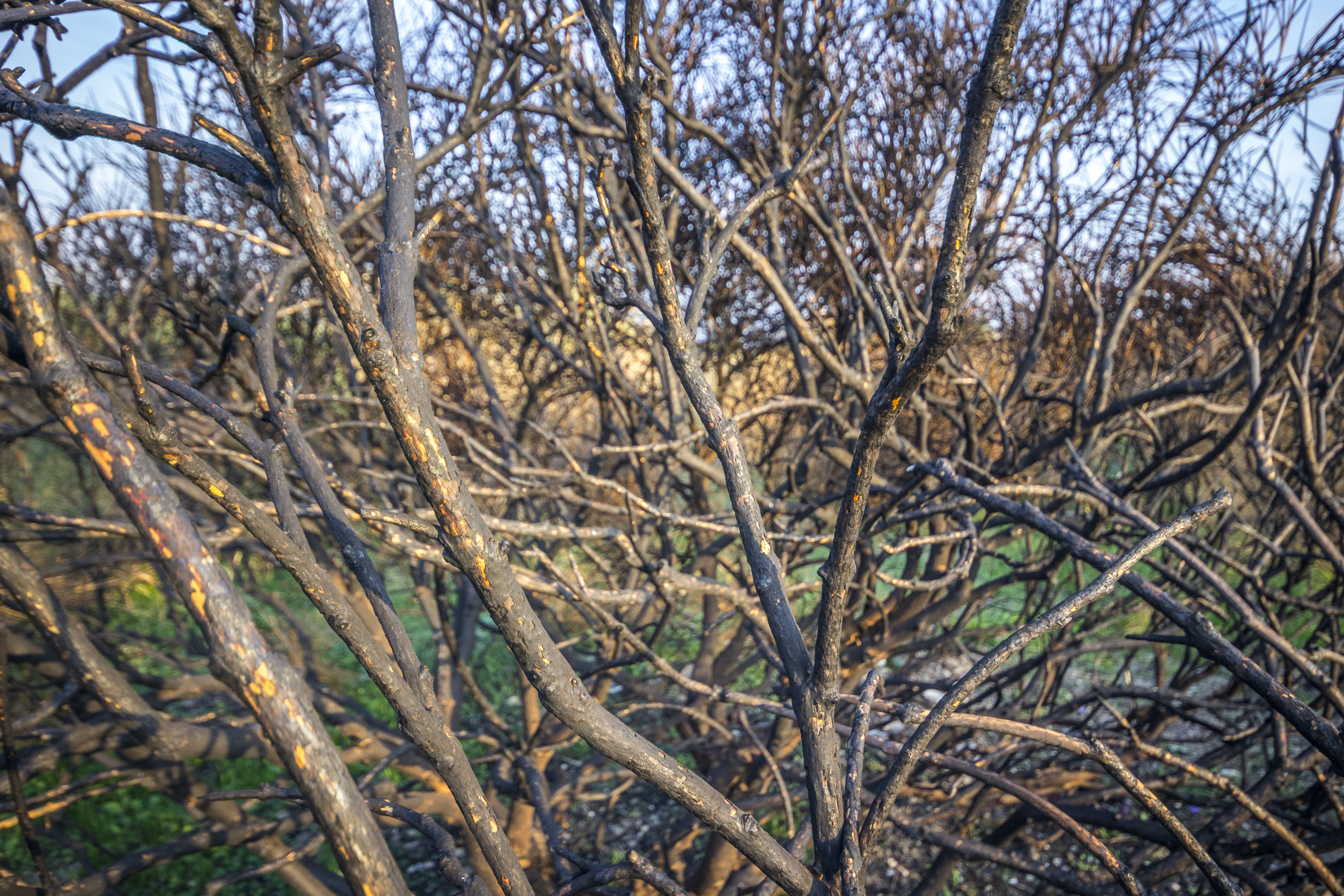 Free stock photo of branch, branches, charred, damaged