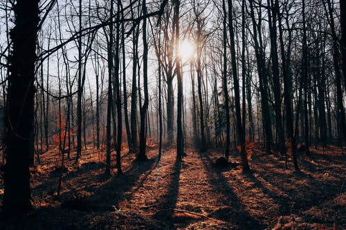 Bare Trees on a Forest