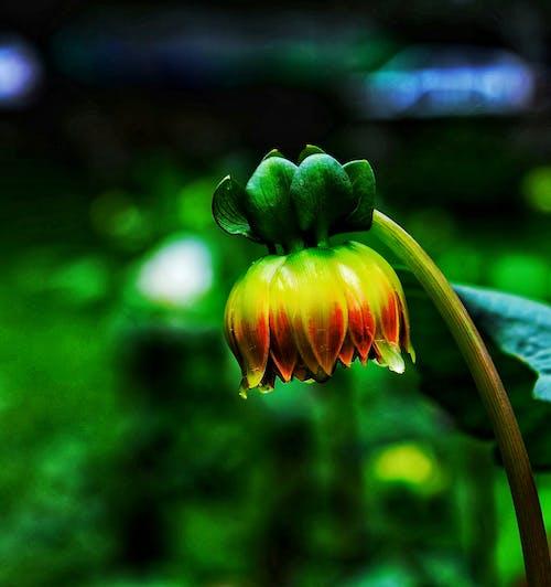 Fotos de stock gratuitas de amor, cerezos en flor, encantador, flor