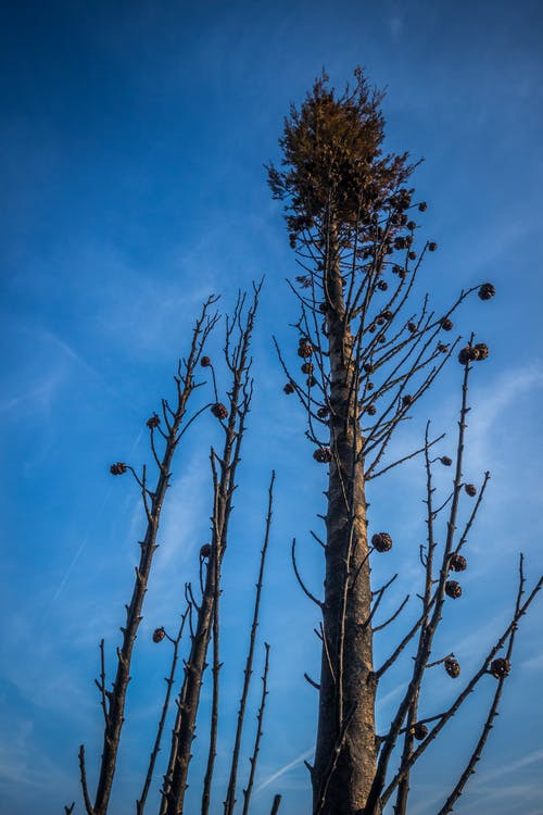 Бесплатное стоковое фото с гореть, дерево, лесной пожар