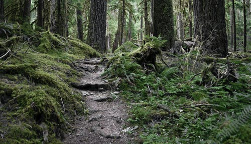 Immagine gratuita di alberi, ambiente, foresta