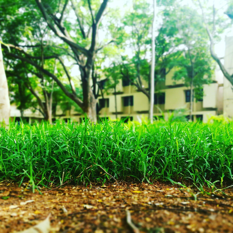 Free stock photo of greenery, low angle photography