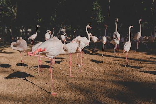 White Flamingos on Brown Soil