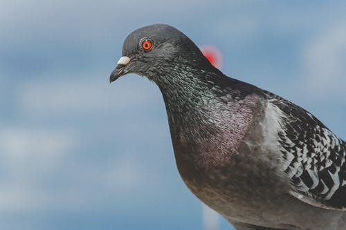 Black and Gray Bird in Close Up Photography
