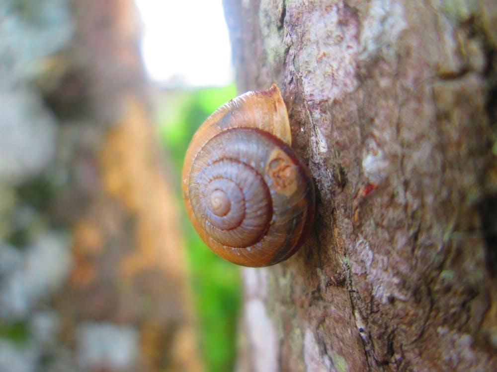 Free stock photo of nature, snail, tree