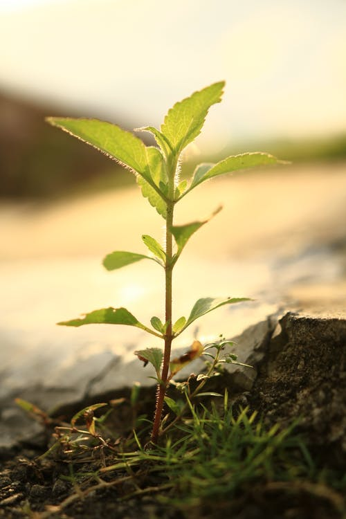 Kostnadsfri bild av Adobe Photoshop, fotografi, frön, grön