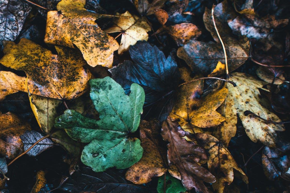 brutícia, colors, decadència
