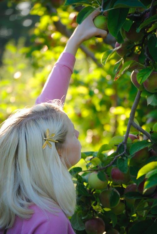 Darmowe zdjęcie z galerii z apple, blond, botanika