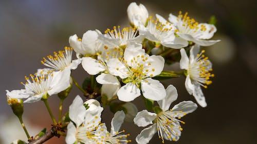 Ảnh lưu trữ miễn phí về cánh hoa, hệ thực vật, Thiên nhiên, thực vật