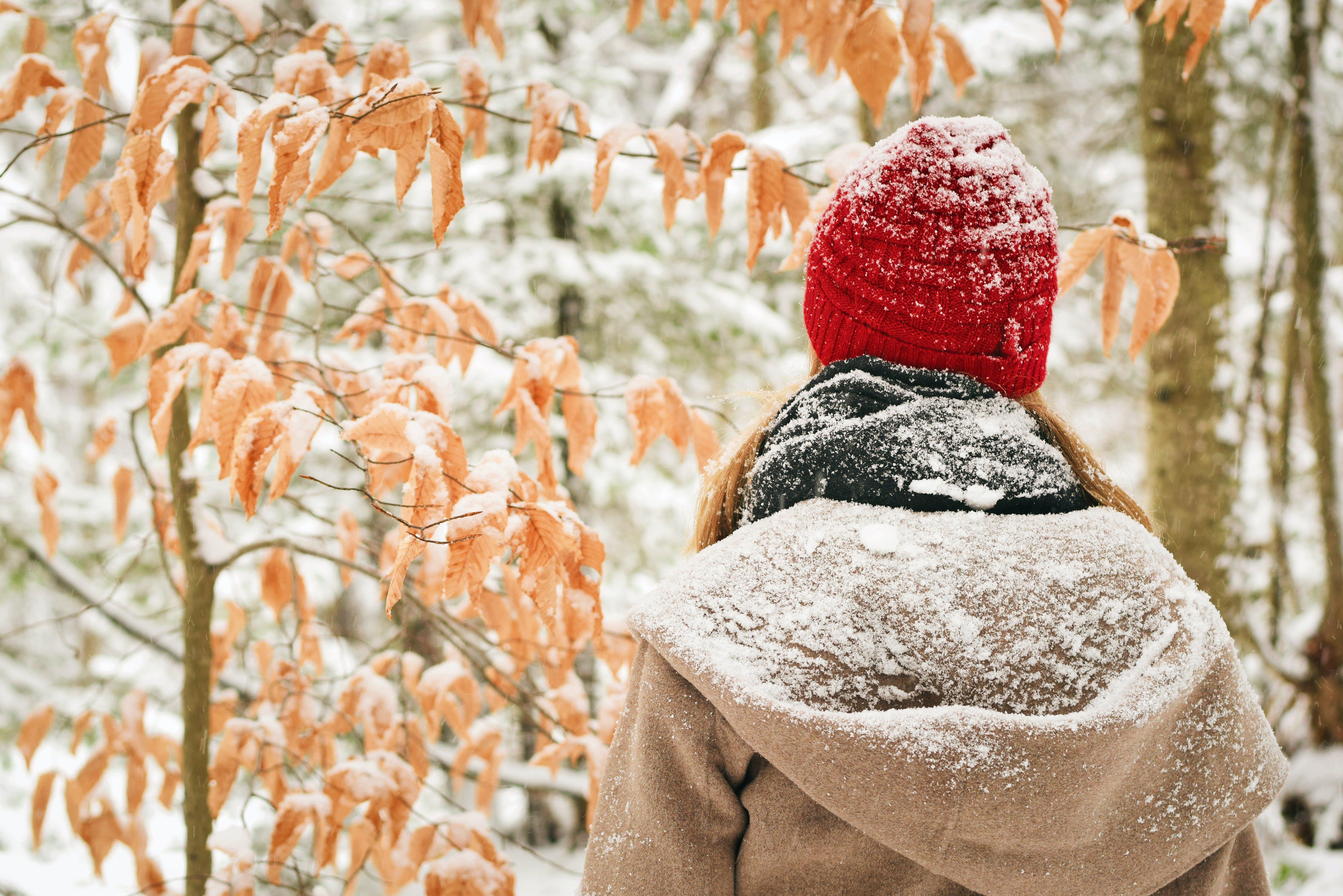 beku, cuaca, dingin