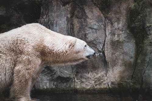 Photos gratuites de animal marin, animal sauvage, habitat