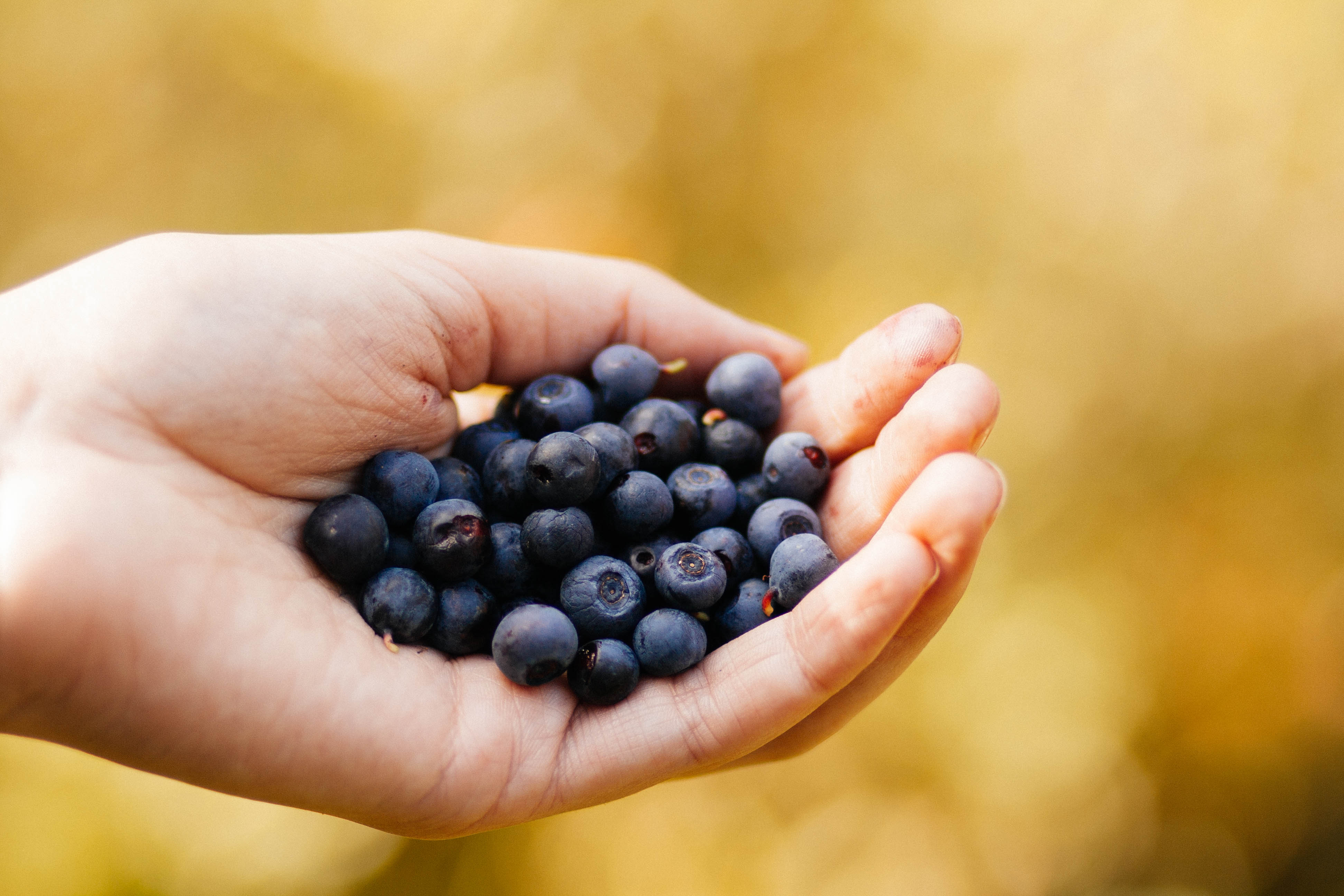 Selective Focus Photography of Blueberry on Human Hand